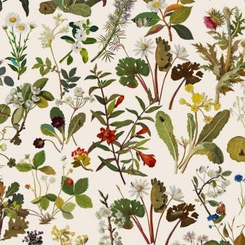 HERBARIUM Wallpaper - Ecru